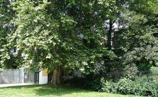Illustration d'arbres à Lille.