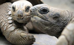 Des tortues dédaigneuses. (illustration)