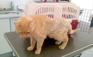 Le chat Noisette a retrouvé sa maîtresse après avoir disparu pendant onze ans.
