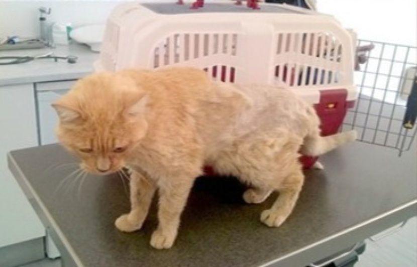Bordeaux : Elle retrouve son chat disparu... onze ans après