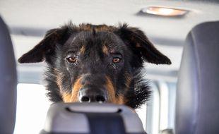 Un des chiens sauvés par la police nationale