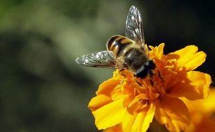 Près de la moitié des colonies d'abeilles suisses, soit 100.000 colonies, ont péri l'hiver dernier, un triste record, selon une étude publiée mardi par les autorités suisses, pour qui la douceur du printemps et de l'automne 2011 ont favorisé la multiplication du parasite principal responsable de ces pertes.