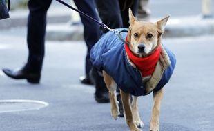 Un chien affronte le froid.