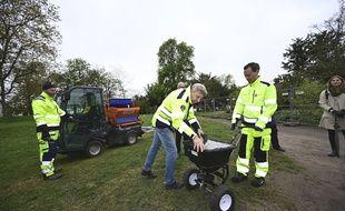 Des agents répandent de la fiente de poulet dans les parcs à Lund, en Suède, ce jeudi 30 avril.