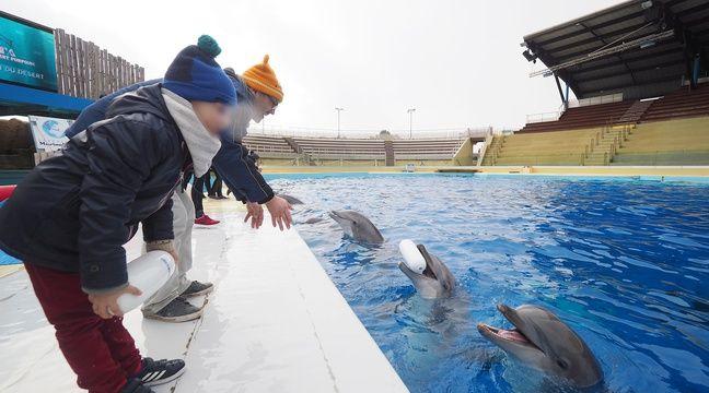 En proie à une «infection», la doyenne des dauphins de Marineland est morte