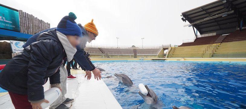 Des dauphins de Marineland (Illustration)