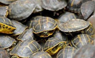"""Plus de 8.700 tortues, oiseaux ou reptiles ont été saisis lors d'une opération """"Cage"""" coordonnée par Interpol contre le trafic d'animaux dans 32 pays entre avril et juin, a indiqué mercredi l'organisation policière internationale."""