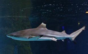 Le gouvernement de la Nouvelle-Calédonie, archipel français du Pacifique sud, a décidé d'interdire la pêche aux requins dans toute sa zone économique exclusive (ZEE), a-t-il indiqué mercredi.