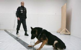 Les chiens suivent des milliers de séances d'entraînement pour comparer les odeurs. A la police technique et scientifique d'Ecully, le 28 septembre 2010.
