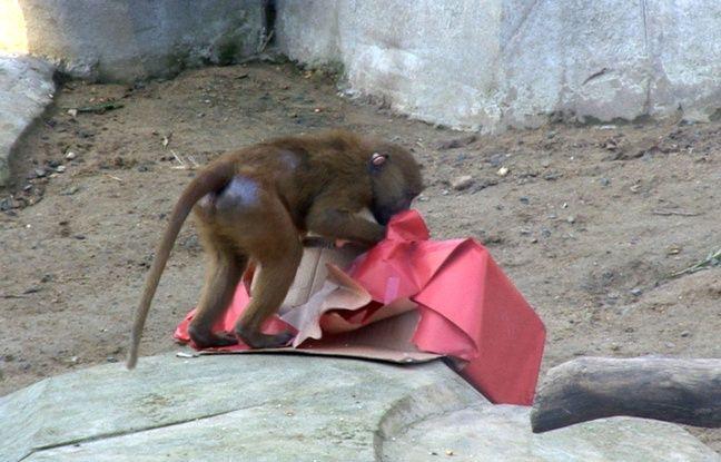 Video no l les animaux de vincennes ont aussi droit for Parc zoologique 78