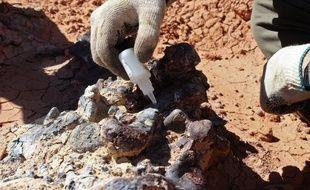 Un archéologue travaillant sur un fossile au parc national d'Ischigualasto dans la province de San Juan, en Argentine, le 8 avril 2019.
