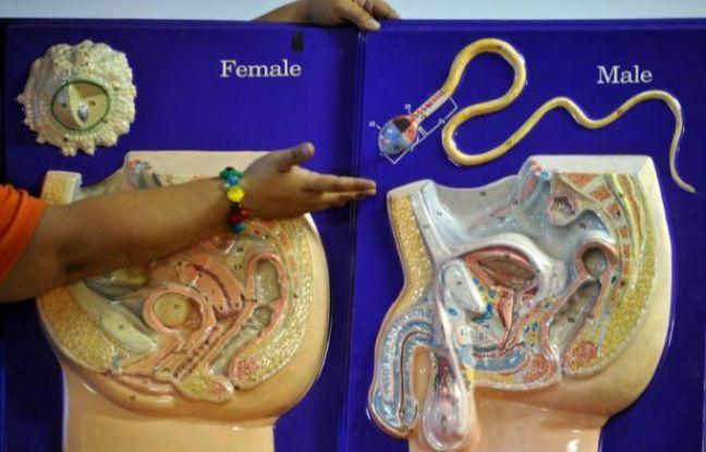 Une leçon d'éducation sexuelle sur le système reproducteur humain.