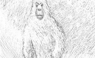 Illustration représentant le yéti.