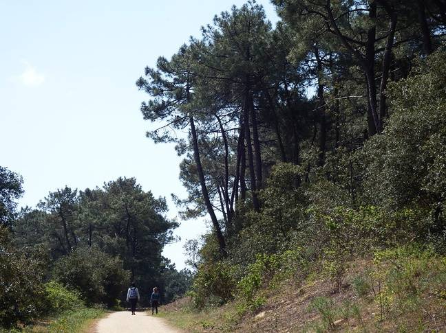 La forêt domaniale du Pays de Monts.