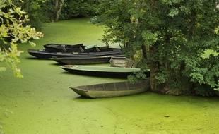 Les eaux vertes du marais poitevin distillent une atmosphère étrange, presque magique.