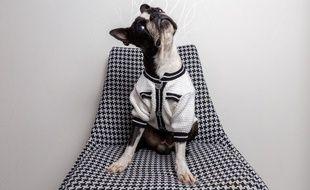 Marque Papattes d'Amour. Vêtements pour animaux..