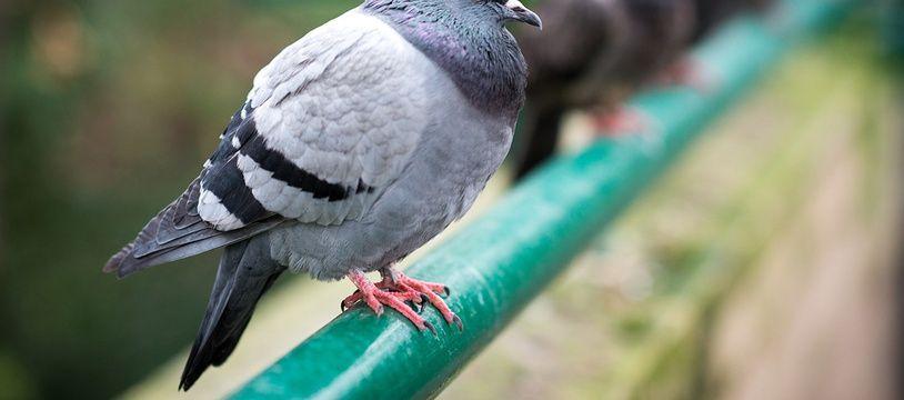 Le technique de la fiente d'oiseau pour les pickpockets (illustration).