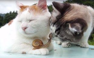 Les deux chats se sont pris d'affection pour ce petit escargot.