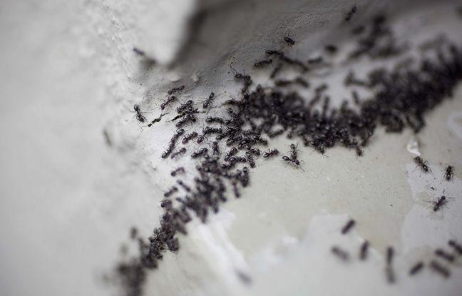 lorraine il veut tuer des fourmis et met le feu son logement. Black Bedroom Furniture Sets. Home Design Ideas