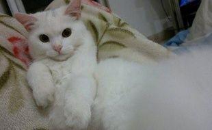 Le chat Kunkush a pu retrouver sa famille, réfugiée en Norvège, grâce à une forte mobilisation d'internautes.