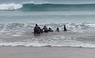 Un groupe de surfeurs a aidé une baleine coincée dans le sable, dans le Pays basque espagnol.