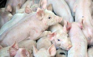 Après plus de deux semaines de suspension, le Marché du porc breton (MPB), qui fixe le prix de référence au plan national, tente de faire revenir les acheteurs