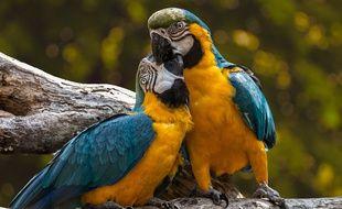 Illustration de perroquets.