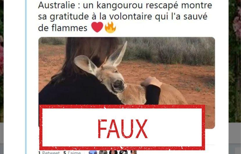 Incendies en Australie : Non, cette image ne montre pas un kangourou qui vient d'être sauvé