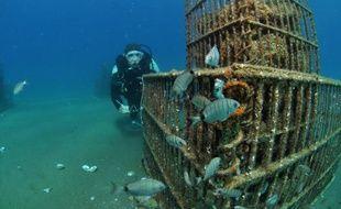 La pollution et le bétonnage déciment les minuscules larves de poissons qui s'approchent des côtes méditerranéennes pour grandir. Au nom de la biodiversité, des chercheurs prélèvent en mer les futurs loups et rascasses, les élèvent en aquarium et les relâchent quand ils sont plus costauds.