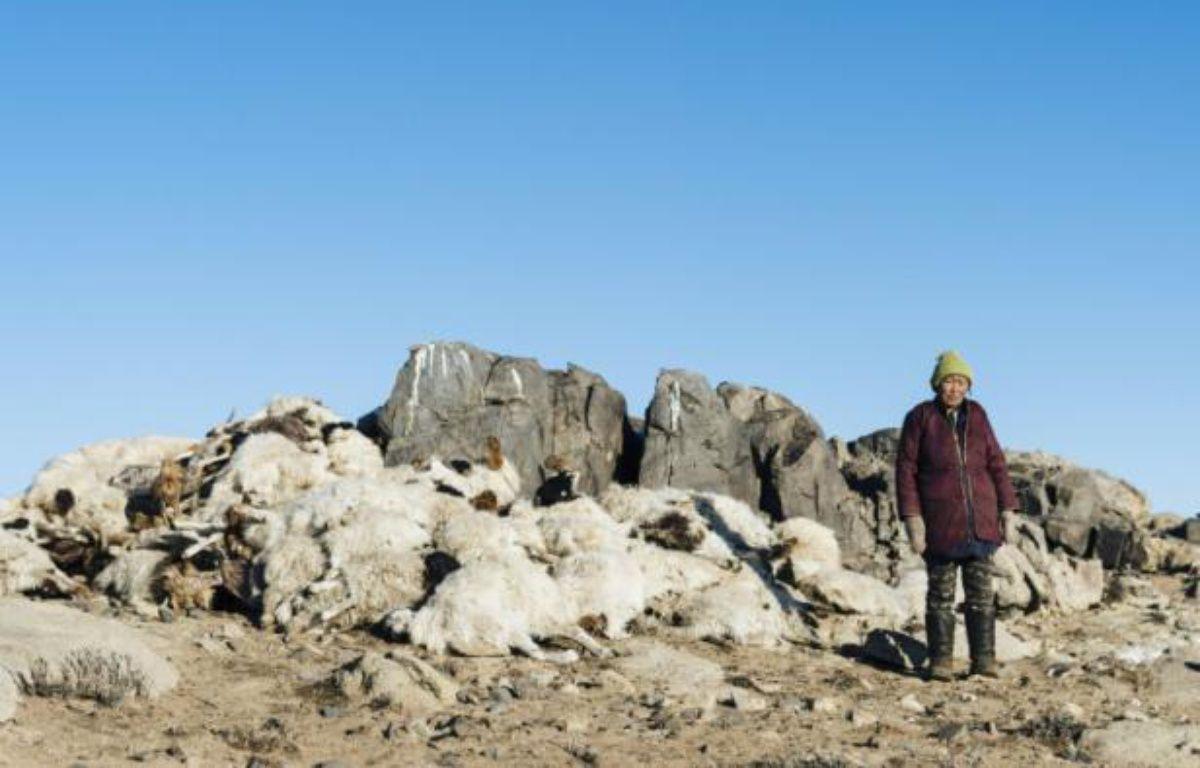 Photographie prise par la Croix-Rouge le 10 mars 2016 et transmise  le 18 mars 2016 montrant une éleveuse mongole devant son cheptel décimé – BENJAMIN SUOMELA HO