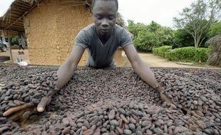 Un ouvrier agricole manipule des fèves de cacao en Côte d'Ivoire en 2003 (illustration).