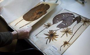 L'Herbier national, le plus grand et le plus ancien herbier du monde, en novembre 2013 au muséum d'histoire naturelle de Paris
