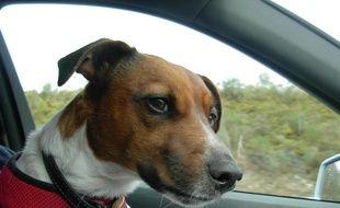 Un chien dans une voiture. Illustration.