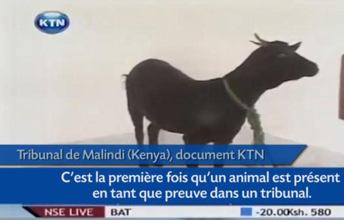 Capture d'écran du reportage de KTN sur le procès du violeur d'une chèvre au Kenya. – Capture d'écran