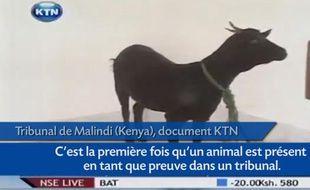 Capture d'écran du reportage de KTN sur le procès du violeur d'une chèvre au Kenya.