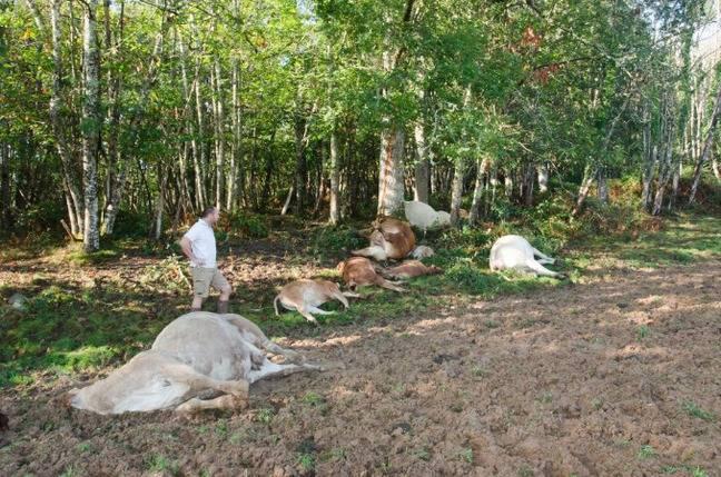 Dix bêtes ont été foudroyées à Bouillac en Dordogne.