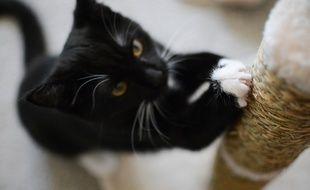 Le griffoir permet d'assouvir le besoin naturel du chat de griffer, encore et encore.