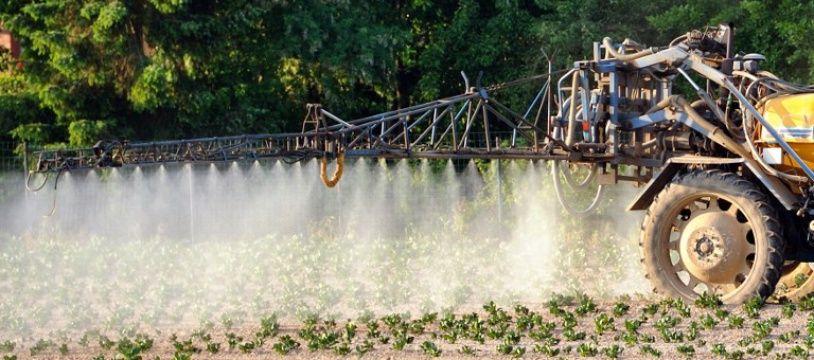 Des pesticides déversés sur un champ de patates, dans le nord de la France (image d'illustration).
