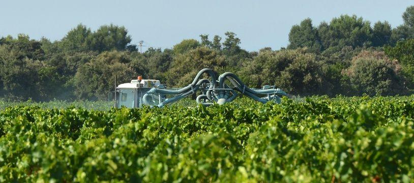 Un épandage de pesticides dans une vigne. Illustration..