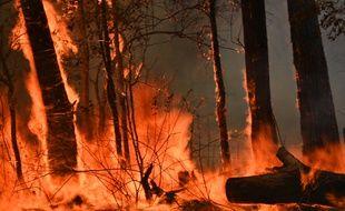 L'Australie est touché par de violents incendies au mois de novembre 2019.