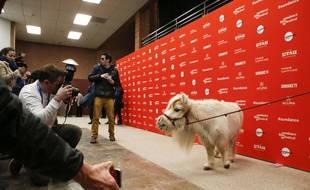 Le cheval miniature Daisy lors de la première du western «Damsel», à Sundance, le 23 janvier 2018.