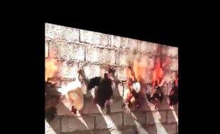 Adel Abdessemed a réalisé une vidéo mettant en scène des poulets en train de brûler au musée d'art contemporain de Lyon.