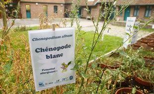 A Villeneuve d'Ascq, on étudie les pollens et leur potentiel allergisant.