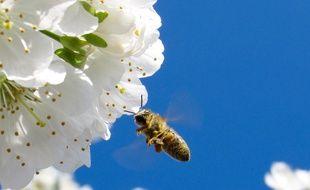 Illustration d'une abeille butinant une fleur