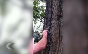 Il relâche un écureuil dans la nature (ça tourne mal) - Le Rewind