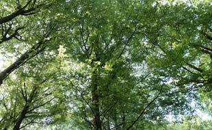 Une forêt en France (image d'illustration).