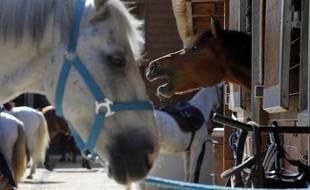 Illustration de chevaux, ici dans un centre équestre en région parisienne.