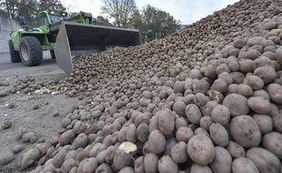Illustration de récolte de pommes de terre.