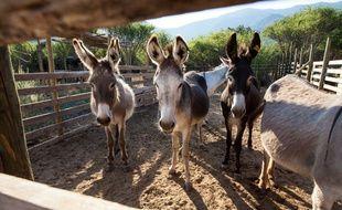 Le Burundi a mis des ânes offerts par la France en quarantaine (image d'illustration).