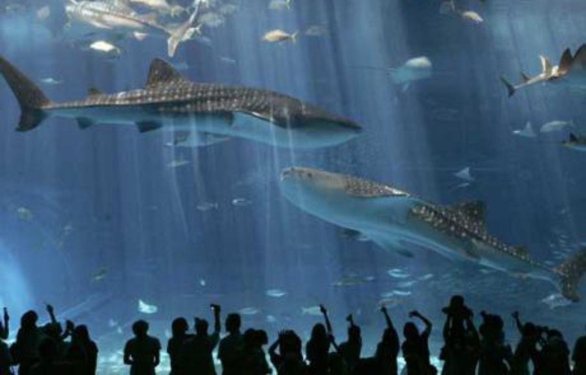 Des spectateurs observent des requins baleines dans le plus grand aquarium du monde à Motobu, Japon, le 9 juillet 2007. – Y. NAKAO / REUTERS